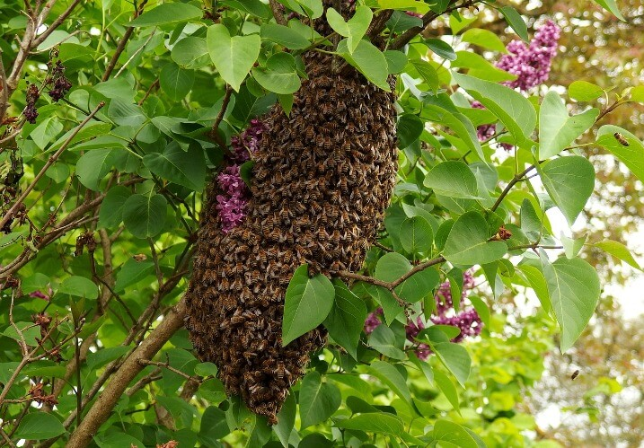 How to get rid of Bees Naturally