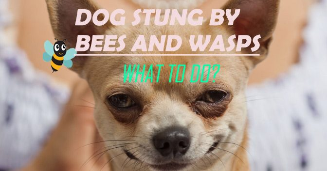 Home Remedies for Dog Stung by Bees and Wasps