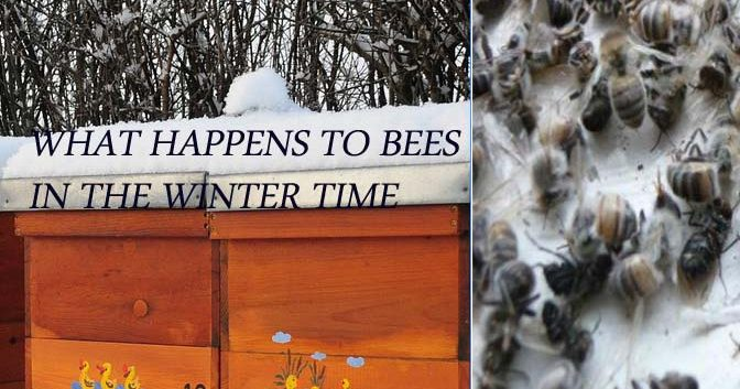 Bees In Winter - Do Bees Hibernate