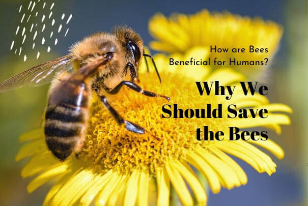 Save The Bees To Save The Earth